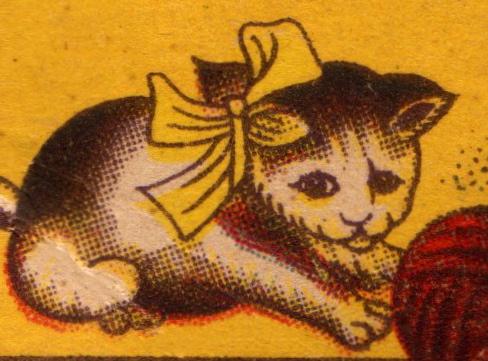 Broadway needle kitten close