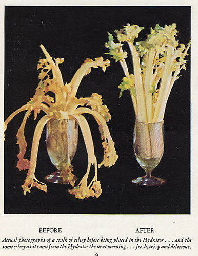 Frigidaire 1931 booklet celery