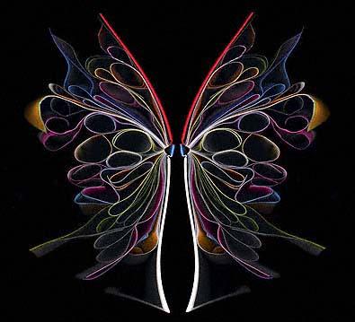 Cara barer butterfly 2