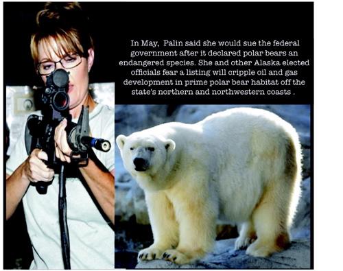 Blog sarah shoots a polar bear composite