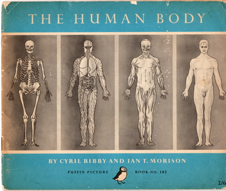 The human body cover small