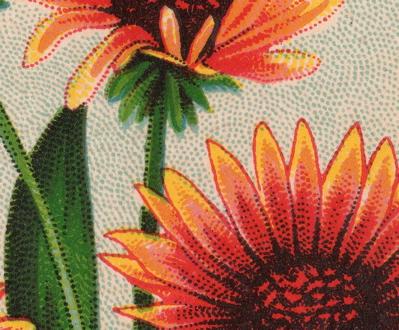 BLOG gailardia detail