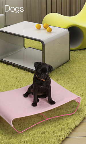 pet furniture, modern pet furniture, hepper, jed crystal, burlington vt designer, black pug