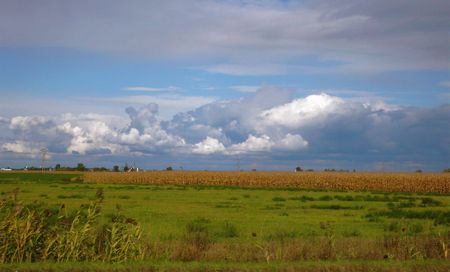 Canadian cornfield, big fluffy clouds, harvest, rt 135, photo liza cowan