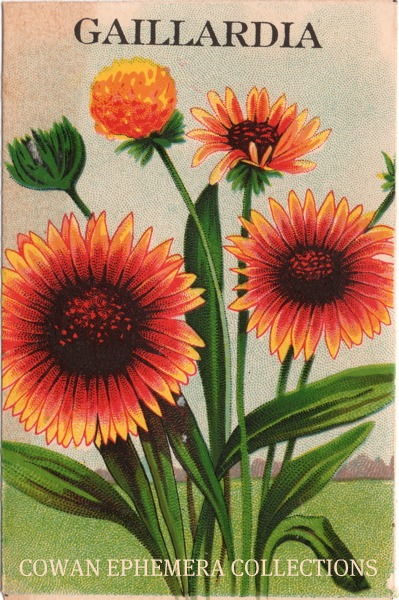 GAILLARDIA SEED PACK STONE LITHOGRAPH COWAN EPHEMERA COLLECTIONS