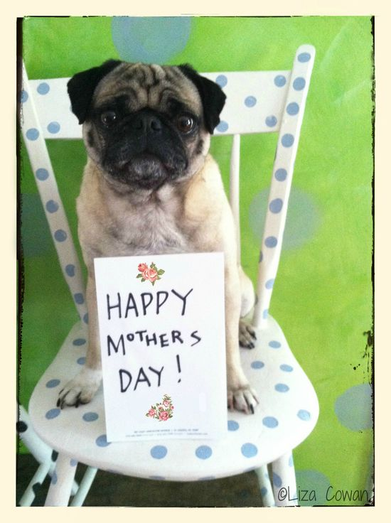 happy mothers day pug photo ©Liza Cowan