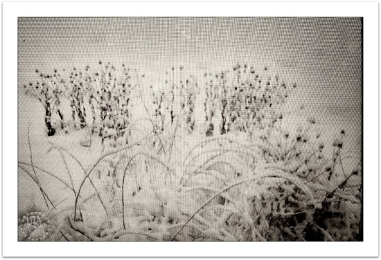 Snow and flower stalks in snow through window screen ©liza cowan
