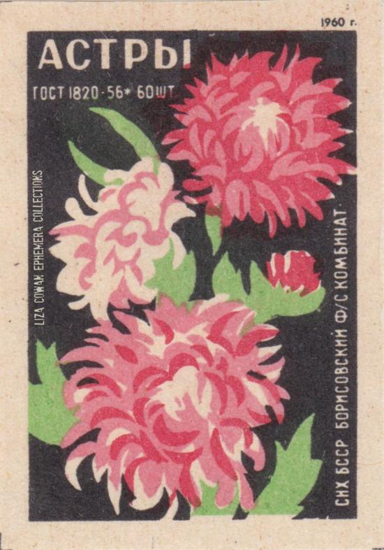 RUSSIAN botanical matchbox label aster liza cowan ephemera collections