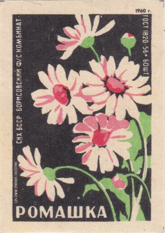 Russian botanical match box label. cammomile