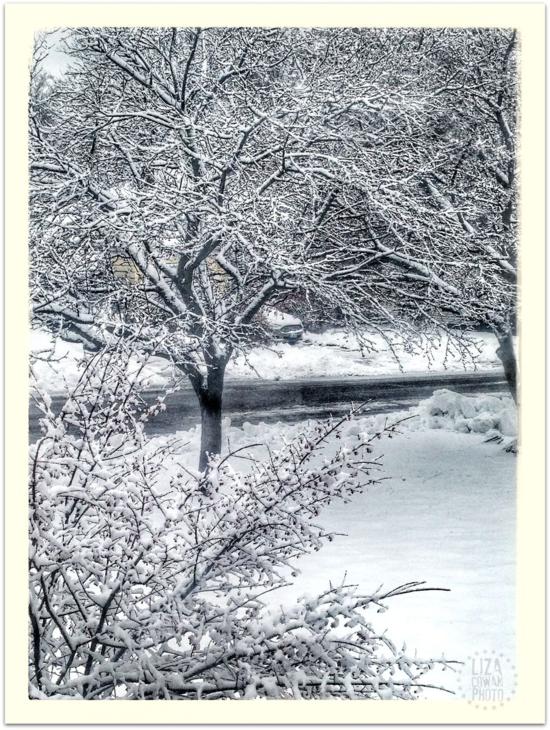 Winter in vermont snow on trees 2014 liza cowan