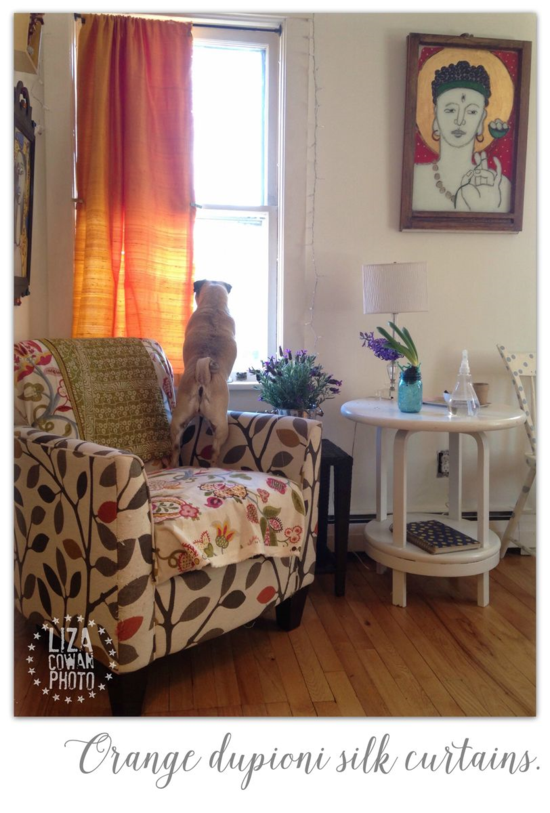 Orange dupioni silk curtains. pug in window. painting by liza cowan. photo ©liza cowan 2015