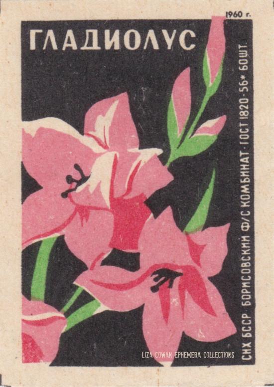 RUSSIAN botanical match box label. gladiola