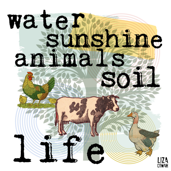 Liza cowan design water sunshine soil